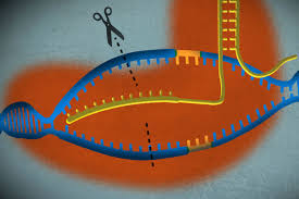 a simple guide to crispr one of the biggest science stories of