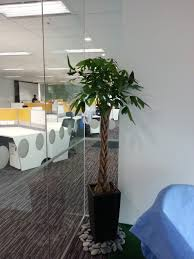office design office plants for sale images office design