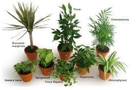 plante de chambre plantes dépolluantes pour un intérieur plus sain i fil home