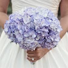 hydrangea wedding purple hydrangea bridal bouquet bouquet wedding flower