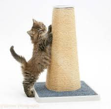 Large Cat Scratching Post Step By Step Instructions To Take Care Of Your Cat U0027s Basic Needs