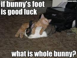 Foot Meme - cat memes lucky rabbits foot cat meme kitten meme kitty meme