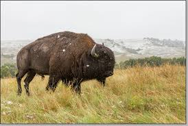 South Dakota wildlife tours images Adventure photography tour highlights south dakota_badlands jpg