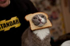 Cat Breading Meme - the world s best photos of breaded and breading flickr hive mind