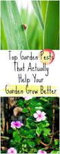 Garden Pests Identification - garden pest control home outdoor decoration