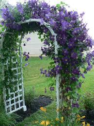 Zone Gardening - what plants to include in your zone 5 garden dengarden