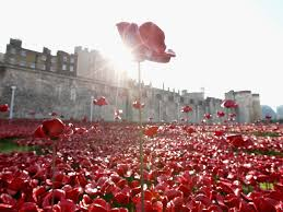 remembrance day tower of london poppy buyers warned they could