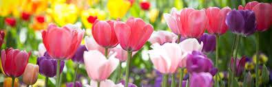 the language of flowers nayaswamis jyotish and devi