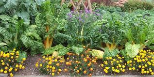 companion plantings san diego edible garden society