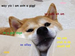 Doge Meme Tumblr - image 583275 doge know your meme