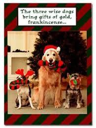 dog christmas cards dog christmas card sayings pet christmas card sayings