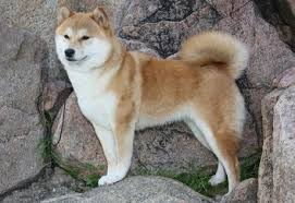Types Of Dogs What Are All The Other Types Of Dogs That Are Similar To A Husky