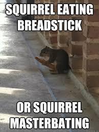 Masterbating Memes - squirrel eating breadstick or squirrel masterbating misc quickmeme