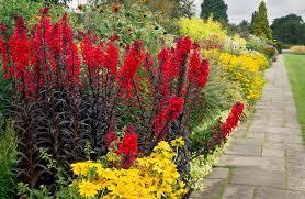 last of the summer flowers wisley gardens surrey uk e u2026 flickr