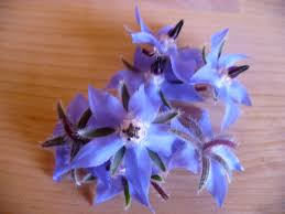 edible blue flowers edible flowers mad about herbs