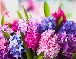 8 flowers to plant for a colourful garden all year round