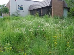 news conservation u0026 native landscaping certificate of merit