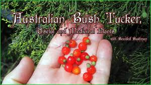 native plants in australia australian bush tucker youtube