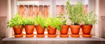 plants indoors grow edible plants indoors for a year round garden