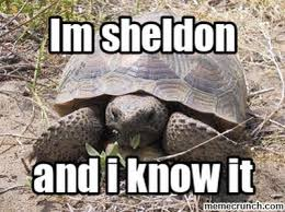 Tortoise Meme - sheldon the tortoise meme