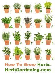 35 creative diy indoor herbs garden ideas ultimate 10 wonderful and cheap diy idea for your garden 7 growing herbs
