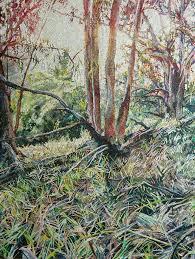eucalyptus trees in tilden park u2013 spun smoke