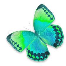 Blue And Green Butterfly - blue and green butterfly isolated on white background stock