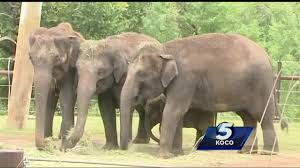 animal rights group names okc zoo as worst zoo for elephants
