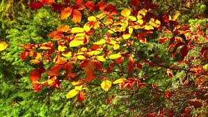 sd autumn flower garden stock footage video 74455 shutterstock