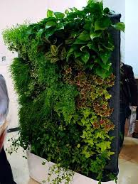 Interior Plant Wall 279 Best Office Plants Images On Pinterest Gardening Plants And