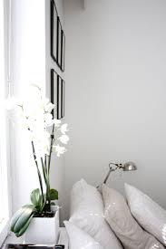uncategorized yellow vase good indoor plants wooden diy