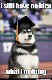 Funny Meme Dog - graduation dog funny meme picture