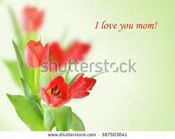 Flowers For Mum - mothers day bouquet tulips text mum stock photo 385703308