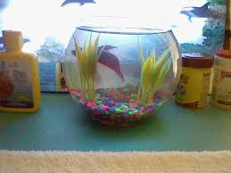 Beta Fish In Vase Betta Fish Post Pictures And Stories Backyard Chickens