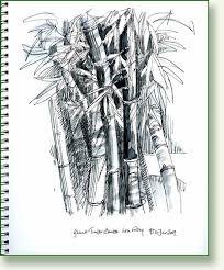 bamboo sketches pencilandleaf flickr