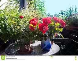 topfpflanzen balkon auf dem balkon den topfpflanzen den kräutern und den roten