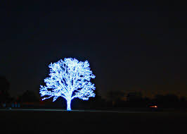 amazing lighted tree if you happened to be driving alo flickr