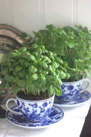 indoor herb garden ideas diy garden design with lazy ladyus