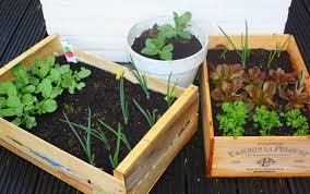 as local as it gets watching the edible balcony garden grow