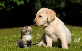 cute dog and cat wallpaper pixelstalk net