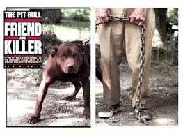 american pit bull terrier history the history of pit bulls u2013 love a bull
