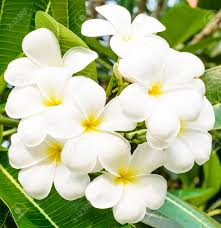 List Of Flowers by Pictures Of White Flowers And Their Names Magiel Info