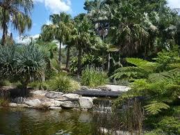 The Australian Botanic Garden The Blue Tree Picture Of The Australian Botanic Garden Mount