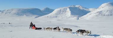 welcome to kirunadogsled com dogsled and snowmobile tours in