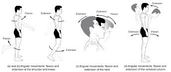 Human Anatomy Planes Of The Body Types Of Body Movements Anatomy And Physiology I