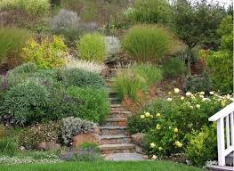 375 best drought tolerant california images on