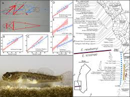 Spine Map Suggests An Endangered Goby In Southern California Is A New Species