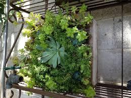 apartment vertical gardening quecasita