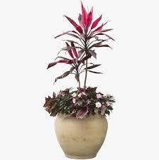 plante de chambre l intérieur de la plante en pot à l intérieur de la chambre des