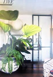 indoor palm best 25 indoor palms ideas on pinterest palm house plants palm